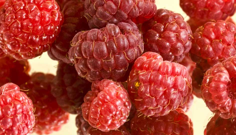 What Is The Raspberry Ketone Diet Labdoor Magazine